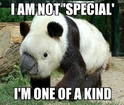 Panda Meme - i am a panda and a bird what of it weknowmemes generator