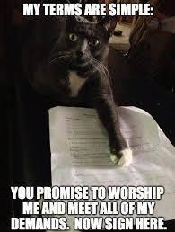 Cat Memes Tumblr - best cat memes
