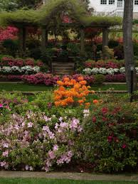 native texas landscaping plants get ready for azalea season east texas gardening