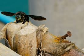 how to identify and control ground bees