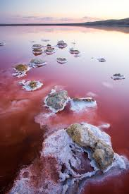 Pink Lake What Makes Salt Lakes Pink Mnn Mother Nature Network