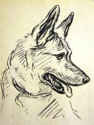 Dog Anatomy Book German Shepherd 1930s Vintage Dog Book Print Lucy Dawson
