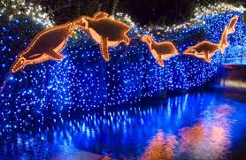 Zoo Lights by Eccentric Eclectic Woman Oregon Zoo Zoolights 4 Tickets Giveaway