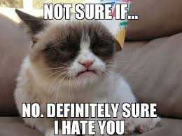 Grumpy Cat Meme No - grumpy cat meme grumpy cat pictures and angry cat meme
