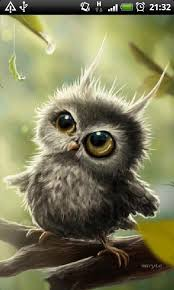 white owl 2 wallpapers brown owl live wallpaper free app download android freeware