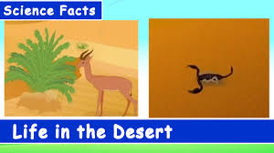 science facts for in the desert and learn series