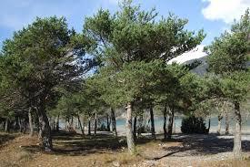 photos camping municipal la garenne crots hautes alpes