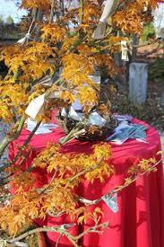 Birthday Wish Tree Wishes Upon Wishes U2013 Longhouse Reserve