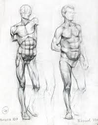 Anatomy Of Human Body Sketches Best 25 Male Figure Ideas On Pinterest Anatomy Drawing Figure