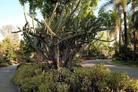 Largest Botanical Garden by A Visit To The Huntington Botanical Gardens The Martha Stewart Blog