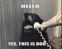 Sexy Dog Meme - funny dog memes i top 50 of all time i world wide interweb