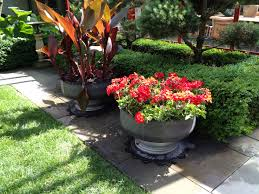 contemporary container plantings dirt simple