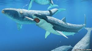 biggest megalodon shark this prehistoric shark was so enormous it ate whale