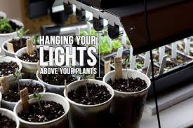 Grow Lights For Plants How High Should Your Grow Lights Be Above Your Plants Growace