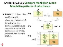 inheritance pattern quizlet mendelian inheritance quizlet powerpoint ppt presentations on