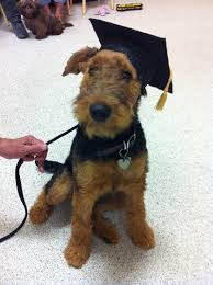 dog graduation cap and gown 9 best adorable graduates images on animals