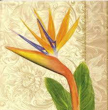 Serviette En Papier Fleur by Serviette En Papier Fleurs Tropique Passioncreationcollection
