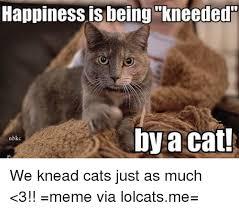 Lolcat Meme - 25 best memes about lolcats cats meme and memes lolcats