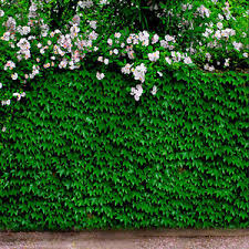 wedding backdrop green green leaf wall photography wedding background 5x7ft studio