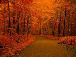 autumn backgrounds pictures group 34