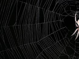 halloween website backgrounds spider web backgrounds group 38