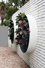 856 best green walls vertical gardening roof gardens images on