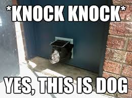 Yes This Is Dog Meme - knock knock yes this is dog door dog quickmeme
