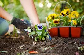 flower garden plans for beginners great gardening tips for beginners deviant world