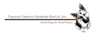 south dakota australian shepherd rescue virginia german shepherd rescue