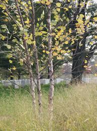 Arlington Cemetery Map Arlington National Cemetery U003e Explore U003e Memorial Arboretum And
