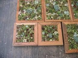 23 best succulent images on pinterest succulent frame