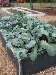 vegetable garden sun requirements vegetable gardening mid atlantic gardening