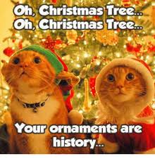 Christmas Cat Memes - christmas tree oh oh christmas tree your ornaments are history