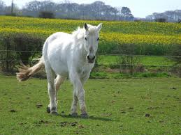 Most Beautiful Colors by 10 Most Beautiful Horses In The World Explore Amazing World