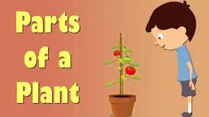 Part Of Flowers - parts of a plant videos for kids youtube