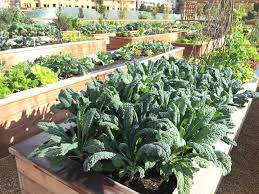 Fall Vegetables Garden by Fall And Winter Gardening Bay Meadows San Mateo