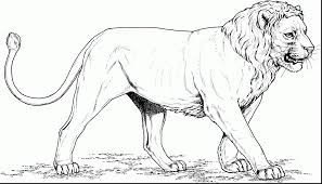 coloring page lion awesome lion coloring pages with lion coloring page dokardokarz net