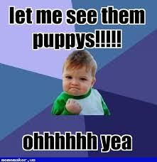 Success Kid Meme Maker - 47 best success kid meme creator images on pinterest success kid