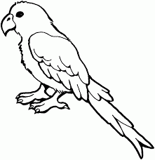 parakeet clipart black and white pencil and in color parakeet