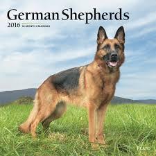 australian shepherd 2016 calendar german shepherd calendars