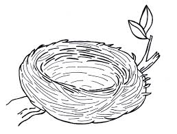 bird u0027s nest clipart colouring pencil and in color bird u0027s nest