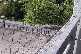 taubenabwehr balkon professionelle tauben und vogelabwehr vergrämung im raum