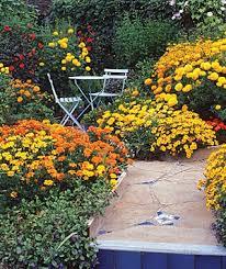 130 best all marigold flowers images on pinterest garden ideas