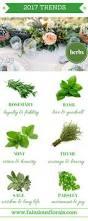 types of evergreens tree planet pinterest florists