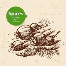 les fonds de cuisine herbes de cuisine et les épices fond de cru avec dessinés à la