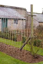 easy pea trellis sweet pea canes poles trellis and watering how to stake peas in