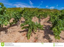 languedoc roussillon province in france stock photo image 93495002