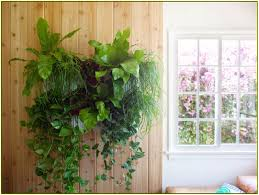 Hanging Wall Planters Wall Planters Indoor Home Design Ideas