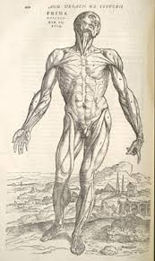 a brief essay on anatomical drawing early 20th century