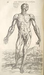 Leonardo Da Vinci Human Anatomy Drawings A Brief Essay On Anatomical Drawing Early 20th Century